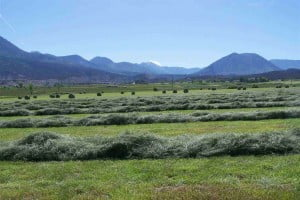 A photo of a ranch for sale in Crawford Colorado.