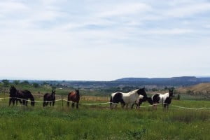 A photo of horses on land for sale outside Paonia Colorado.