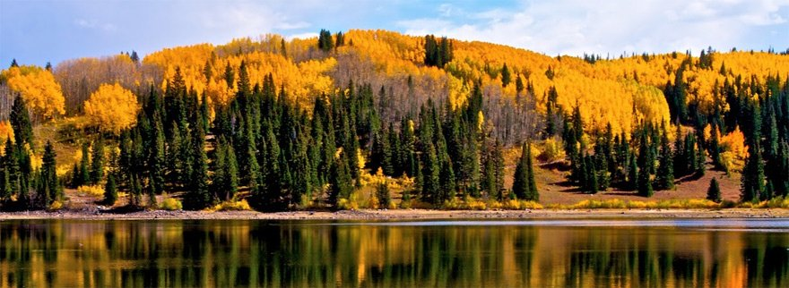 Aspen and pines reflect on a lake