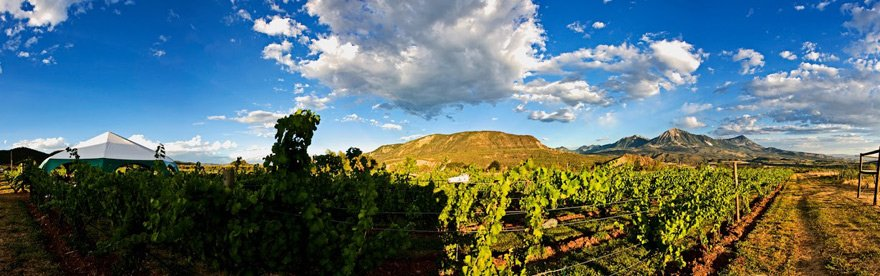 A panoramic shot of a vineyard overlooking Paonia, Colorado.